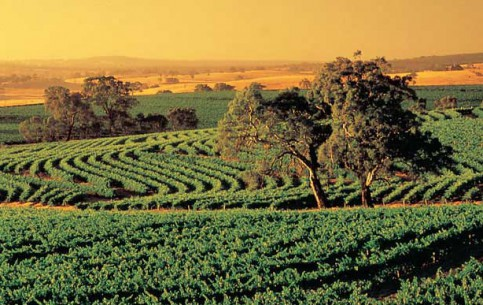 Images Barossa Valley landscape