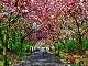 Brussels Parks