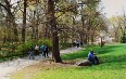 Central Park during Spring Day 图片