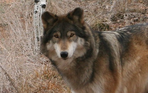 科罗拉多斯普林斯:  科羅拉多州:  美国:  