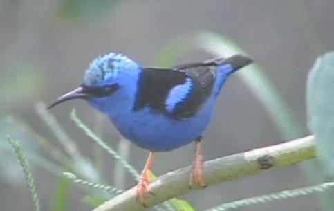 Коста-Рика:      Природа Коста-рики