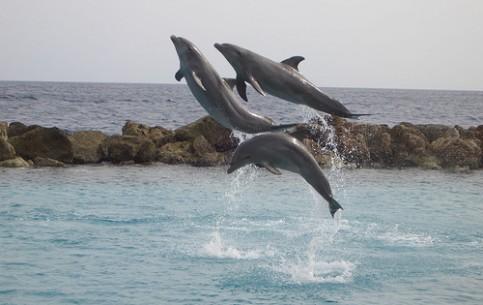 库拉索:  荷兰:      entertainment in Curacao