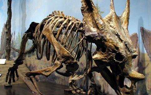 卡尔加里:  艾伯塔:  加拿大:      省立恐龙公园