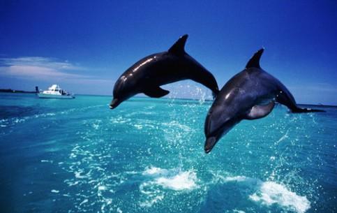 Гибралтар:  Великобритания:      Наблюдение за дельфинами, Гибралтар
