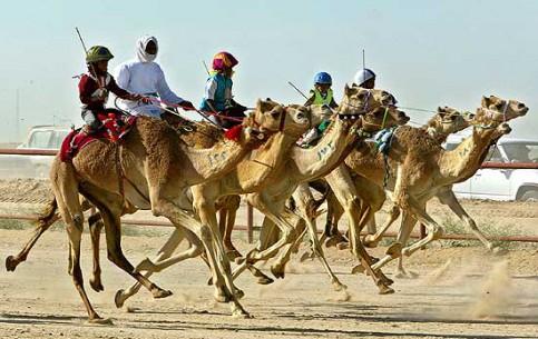 ドバイ:  アラブ首長国連邦:      Dubai Camel Race