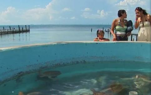 Канкун:  Мексика:      Эко туризм в Канкуне