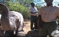 Feeding Elephants at Buffelsdrift Game Lodge 图片