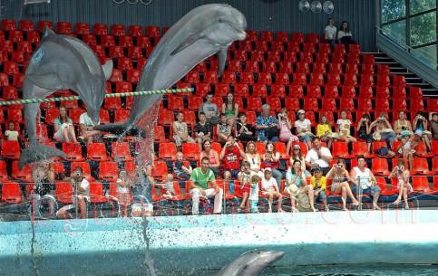Варна:  Болгария:      Дельфинарий Феста