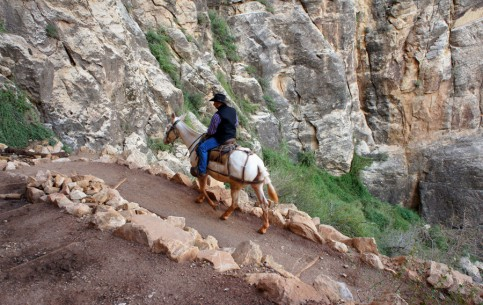 Аризона:  Соединённые Штаты Америки:      Прогулка на мулах, Гранд-Каньон