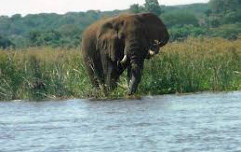 Phalaborwa:  Limpopo:  South Africa:  