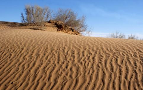 Uzbekistan:      Kyzyl Kum desert