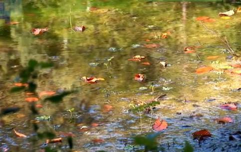 Ивано-Франковск:  Украина:      Озеро Лебедин