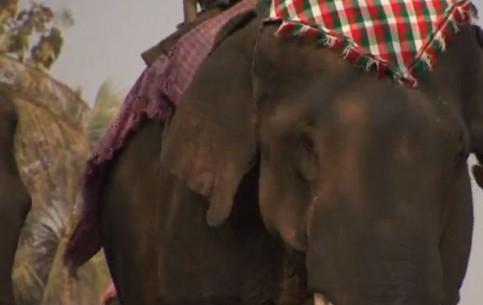 ラオス:      Laos Elephant Festival