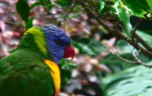 Канарские острова:  Санта-Крус-де-Тенерифе:  Испания:      Лоро парк
