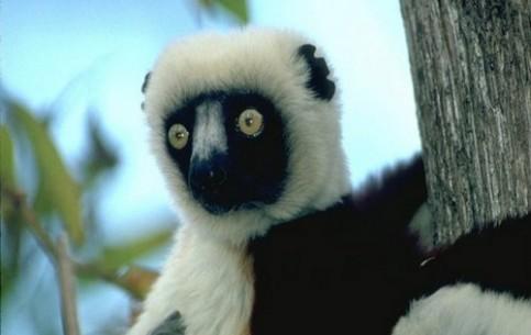 マダガスカル:      Madagascar fauna