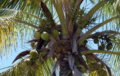 モーリシャス:      Mauritius Flora and Fauna