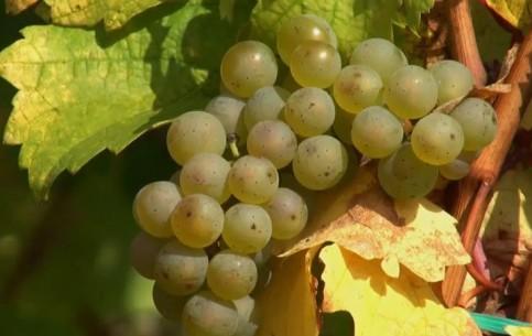 Baden-Wuerttemberg:  Rhineland-Palatinate:  ドイツ:      Mont Calmont Vineyards