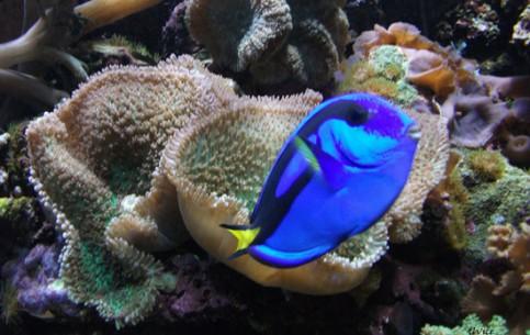 Washington, D.C.:  アメリカ合衆国:      National Aquarium in Washington