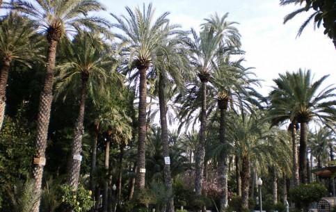 瓦伦西亚:  西班牙:      Palmeral of Elche