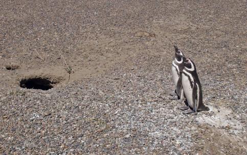 アルゼンチン:      Punta Tombo