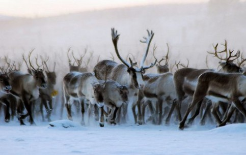 Greenland:  デンマーク:  