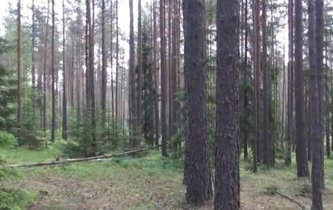Minsk:  Belarus:      Rudnya Sanatorium