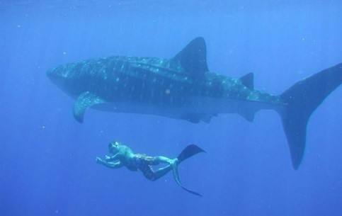 圣卢西亚:      Saint Lucia diving