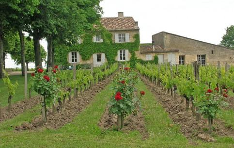 Gironde:  France:      Saint-Émilion
