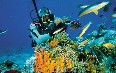 San Andres Island, Diving Images