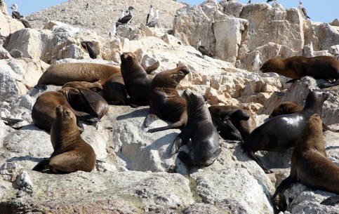 Cape Town:  South Africa:  