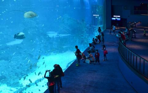 Singapore:      Singapore Aquarium