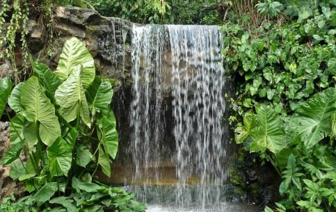 新加坡:      Singapore Botanic Gardens