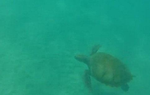 巴巴多斯:  