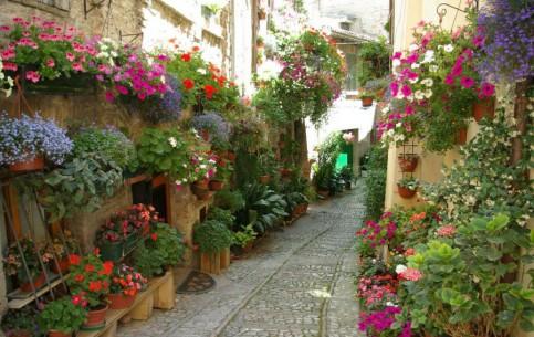 Умбрия:  Италия:      Спелло