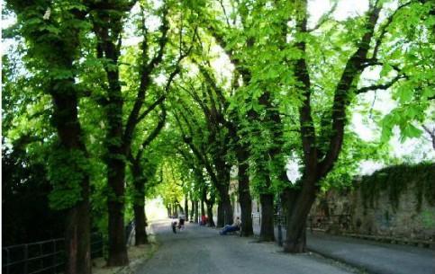 ザグレブ:  クロアチア:      Strossmayer Promenade
