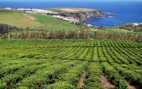 Azores Island:  Portugal:  