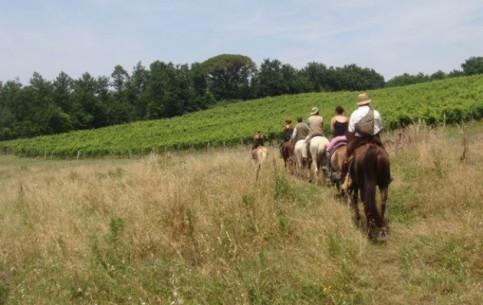 Toscana:  Italy:      Toscana equestrian tours