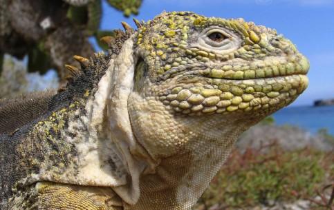 Эквадор:      Путешествие на Галапагосские острова