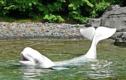 Vancouver:  British Columbia:  Canada:      Vancouver Aquarium