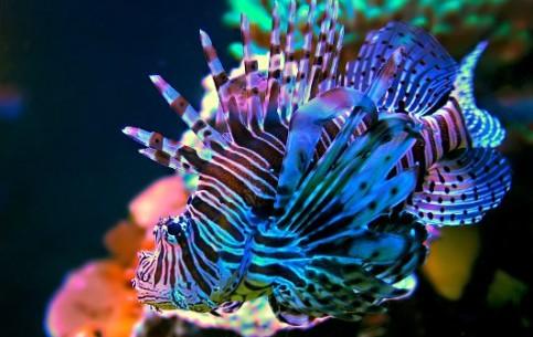 モルディブ:      Maldives diving